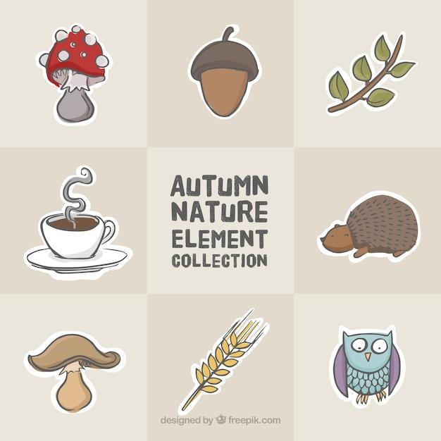 Owl avec d'autres éléments de la nature