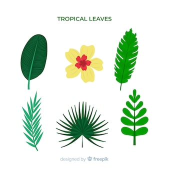 Pack de feuilles et de fleurs tropicales dessinées à la main