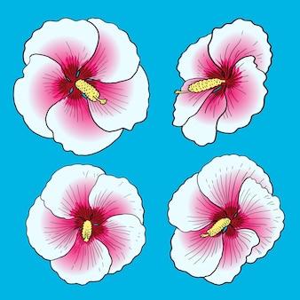 Pack de fleurs d'hibiscus de nuit étoilée rose blanche pour la collection