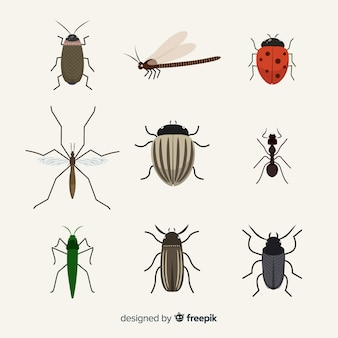 Pack d'insectes plats