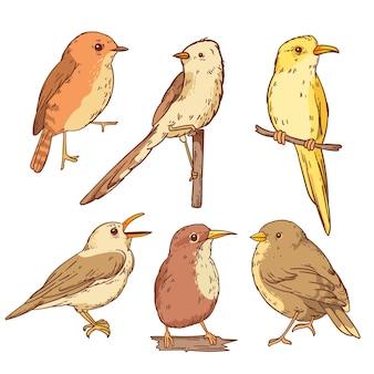 Pack d'oiseaux robin dessinés à la main