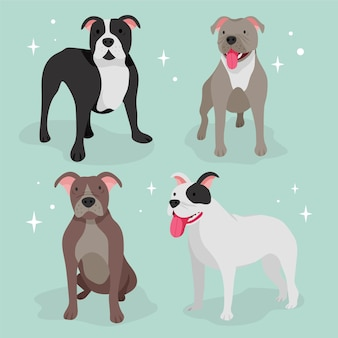 Pack pitbull design plat