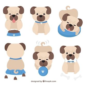 Pack de pugs avec un style adorable