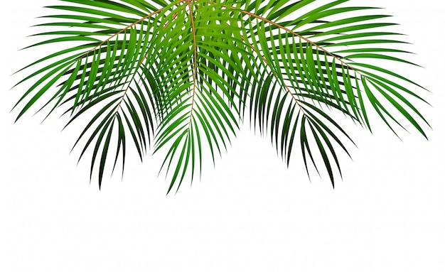 Palm leaf vector illustration de fond