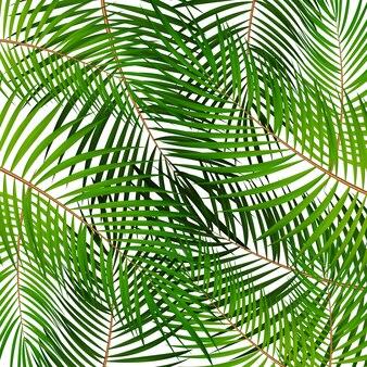 Palm leaf vector illustration de fond