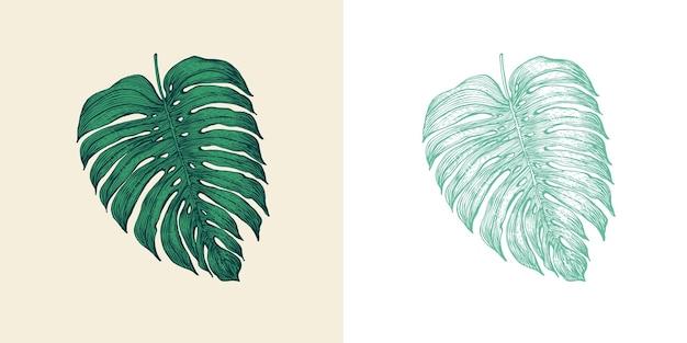 Palm plante tropicale monstera feuilles exotiques et feuilles de fougère vintage fleurs gravées dessinées à la main