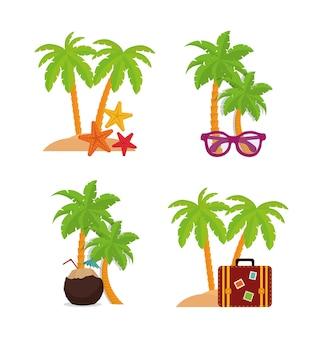 Palmier et design d'été