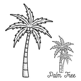 Palmier dessiné à la main