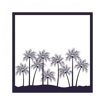 Palmier à la noix de coco sur fond blanc