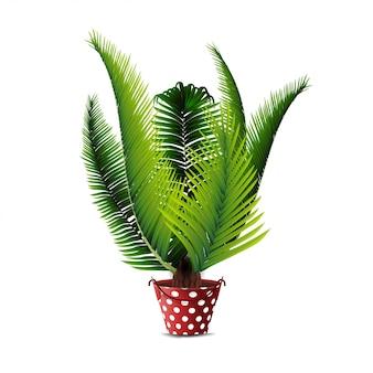 Palmier en pot isolé