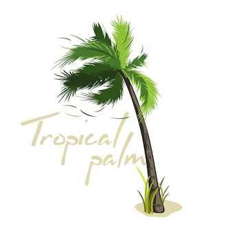 Palmier vert dessin animé