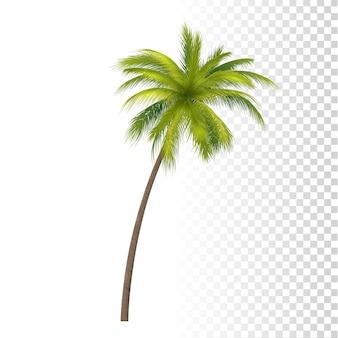 Palmier vert à la noix de coco