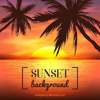 Palmiers avec le coucher du soleil fond
