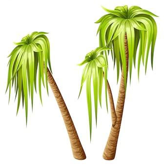 Palmiers isolés sur fond blanc.
