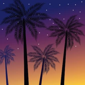 Palmiers de plage au coucher du soleil