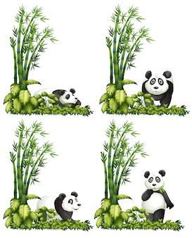 Panda Et Bambou Vecteur Premium