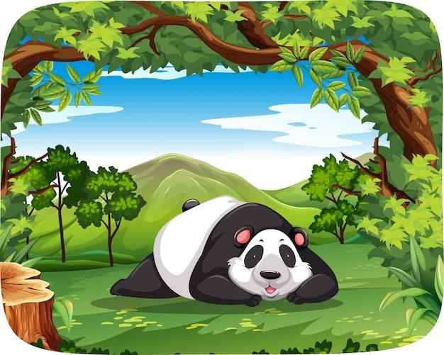 Panda dans une scène en bois