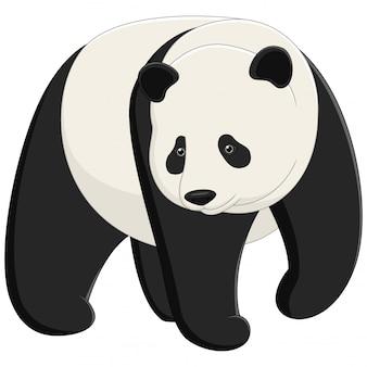 Panda géant adulte mignon isolé sur fond blanc