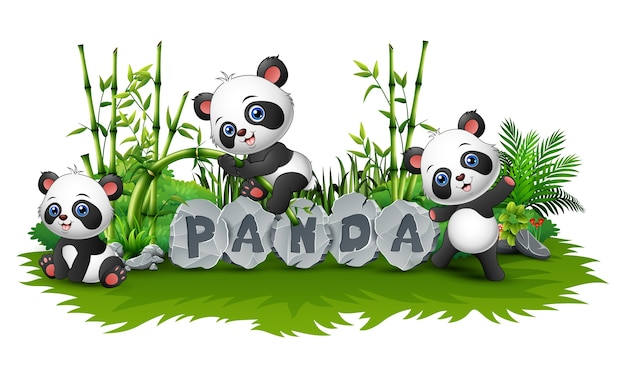 Panda joue ensemble dans le jardin