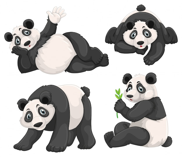 Panda en quatre poses différentes