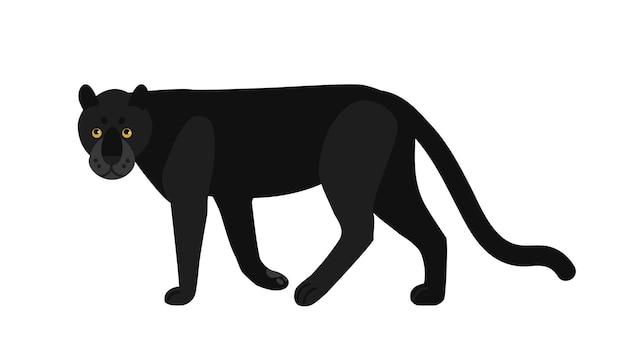 Panthère noire isolée sur blanc