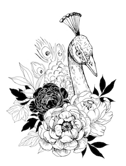 Paon avec des fleurs de pivoine. illustration dessinée à la main isolée sur blanc