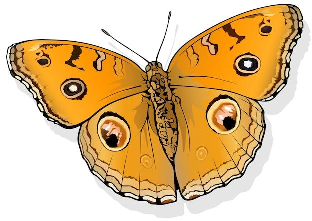 Paon pensée papillon junionia almana
