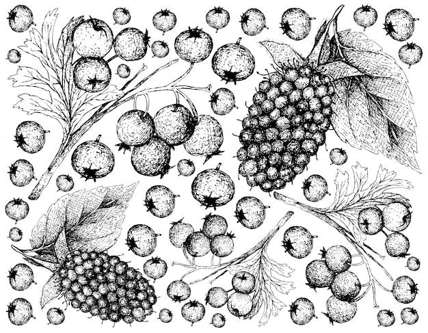 Papier peint dessiné à la main de baies d'aubépines et de kotataberries