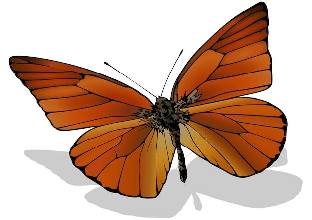 Papillon albatros orange appias nero