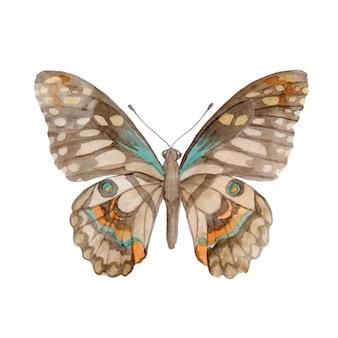 Papillon aquarelle peint à la main