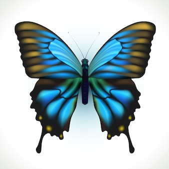 Papillon lumineux réaliste isolé