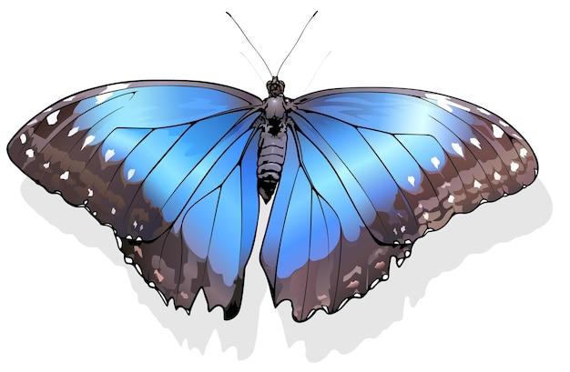 Papillon morpho bleu morpho peleides