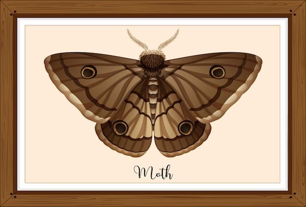 Papillon de nuit sur cadre en bois
