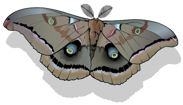Papillon papillon polyphème antheraea polyphemus