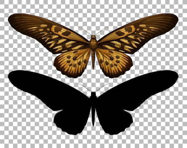 Papillon et sa silhouette sur fond transparent