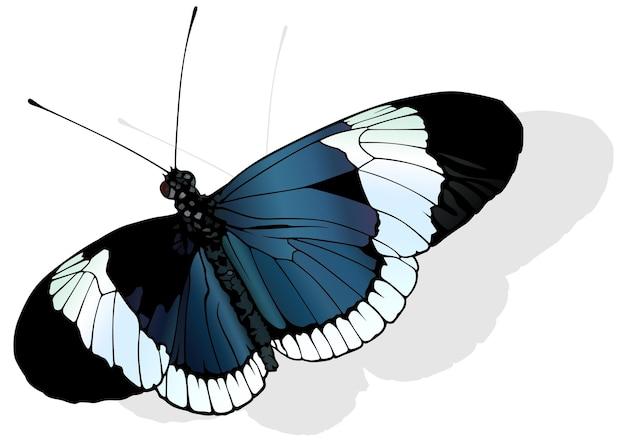 Papillon sapho à ailes longues heliconius sapho