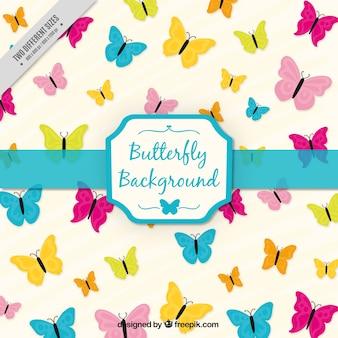 Papillons colorés fond