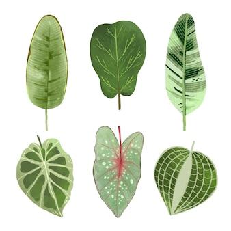 Paquet de différentes feuilles tropicales