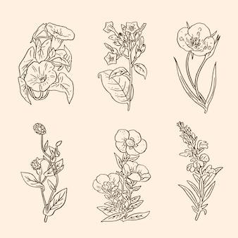 Paquet d'herbes dessinées à la main et de fleurs sauvages réalistes