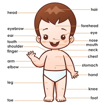 Partie du vocabulaire du corps