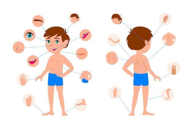 Parties du corps du petit jeu d'illustrations de garçon de dessin animé