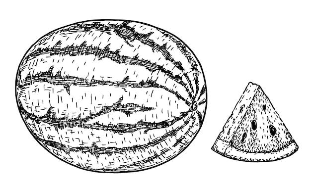 Pastèque et tranche. illustration vectorielle de croquis. fruit de melon isolé sur fond blanc. dessin à main levée. décoration pour le menu et la conception de la cuisine. gravure ancienne en noir et blanc. la nourriture végétarienne