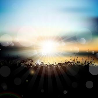 Paysage grassy au coucher du soleil