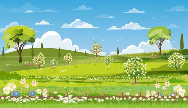 Paysage de nature printanière avec champ d'herbe ciel bleu et nuages.