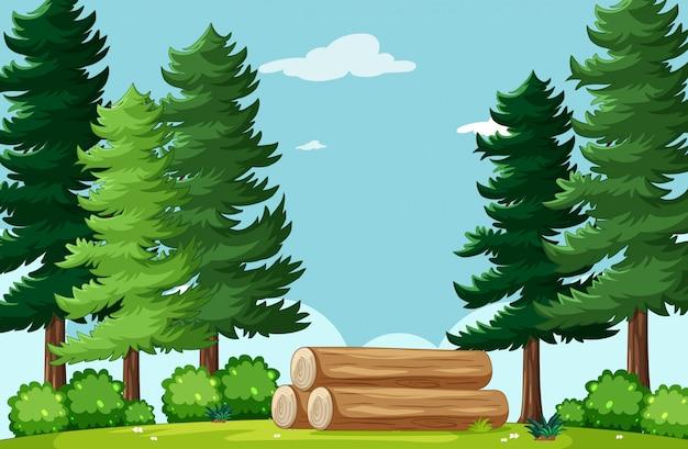 Paysage de parc naturel fond vide