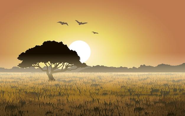 Paysage de prairies brumeuses au coucher du soleil
