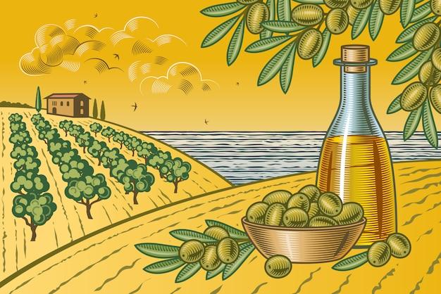 Paysage de récolte d'olives