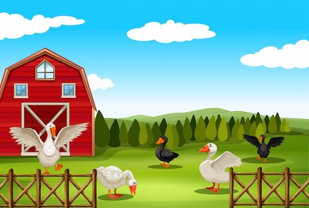 Paysage de terres agricoles