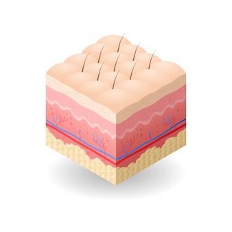Peau avec cellulite et cheveux coupe transversale de couches de peau humaine structure soins de la peau concept médical plat