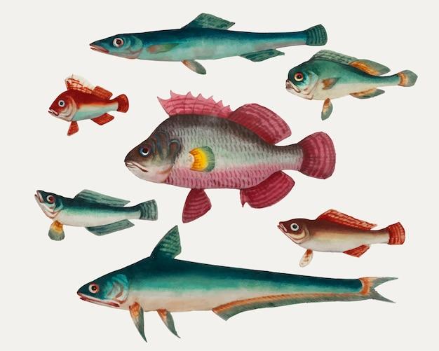 Peinture chinoise d'un poisson rose